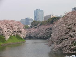 千鳥が淵の桜.JPG