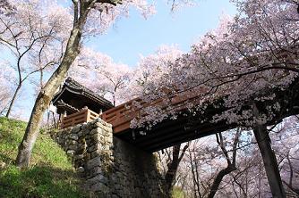 takato-sakura.JPG