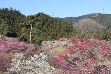yoshinobaigou-umenosato.JPG